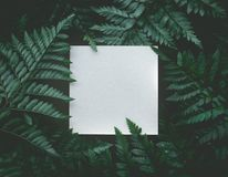 Real fern leaves with white copy space background. Nature concepts design Stock Photography