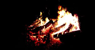Real fire flames burn movement with branches of wood on black stock footage