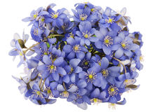 Real first european springs flowers Stock Images