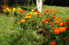 Real flourished garden. A real flourished garden with colorful flowers in orange, red and yellow Stock Photography