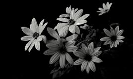 Real flowers in black&white. Real wild flowers look like plastic Royalty Free Stock Photography