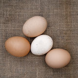 Real fresh farm eggs on old hessian, burlap background cloth. Sq Royalty Free Stock Image