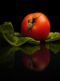 Real fresh tomato. Tomato and salat on black background Stock Photo