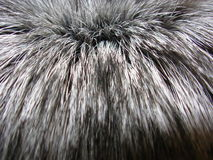 Real fur of silver fox. Real fur texture of silver fox Stock Photography