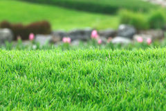 Real grass with blur background Stock Photo
