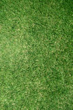Real grass lawn texture Stock Image