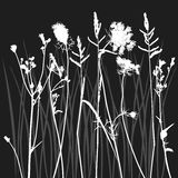 Real Grass Silhouette Royalty Free Stock Images