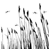 Real grass silhouette and  few dragonflies Royalty Free Stock Image