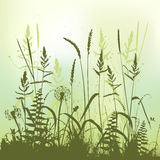 Real grass silhouette, meadow during summertime Royalty Free Stock Photo
