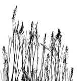 Real Grass Silhouette / Vector Stock Photos