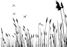 Real grass silhouette - vector. Two colors Royalty Free Stock Photos