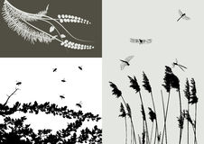 Real grass silhouette - vector set Royalty Free Stock Photos