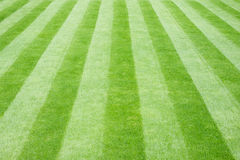Real Grass Striped Lawn royalty free stock photography