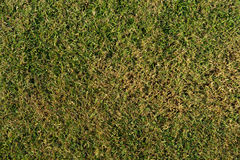Real green dry grass on ground Royalty Free Stock Photos