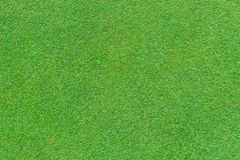 Real green grass background Stock Image