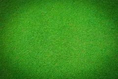 Real green grass background Royalty Free Stock Image