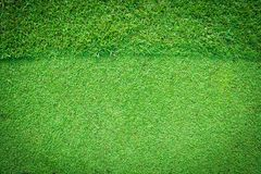 Real green grass background Royalty Free Stock Photography