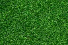 Real green grass background. High angle view of green grass Royalty Free Stock Photos