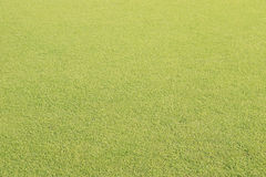 Real green grass background texture Stock Photography