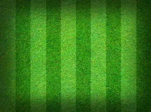 Real green grass field Stock Images