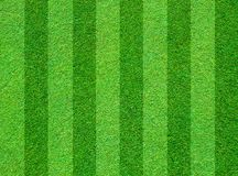 Real green grass field Stock Photography