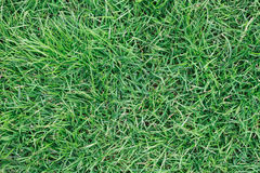 Real green grass for pattern and background Royalty Free Stock Photos