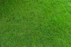 Real green grass texture Royalty Free Stock Photography