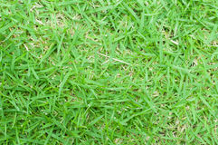 Real green grass texture Stock Images