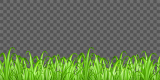Real green grass on transparent background vector Stock Photo