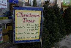 REAL GREEN TREE CHRISTMAS TREE ON SALE Royalty Free Stock Photos