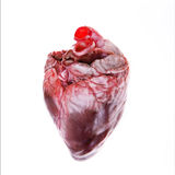 Real heart. Organ (pig) isolated on white Royalty Free Stock Photo