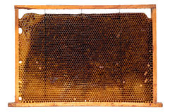 Real honeycomb removed from the hive isolated. On white royalty free stock photos