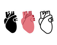 Real human heart in flat style, vector Royalty Free Stock Image