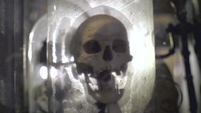 Real Human Scull