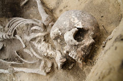 Real human skeleton exhumed. Exhumed skeleton of man with skull and chest visible Royalty Free Stock Photos