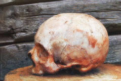 Real human skull on the background of a wooden wall stock photography