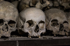 Real human skulls as background Royalty Free Stock Images