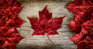 Free Real Leaf Canada Flag On Weathered Cedar Stock Images - 34161734