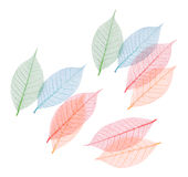 Real leaf with detail vein and various colors Stock Photos