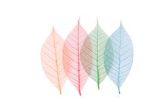 Real leaf with detail vein and various colors Stock Image