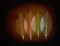 Real leaf with detail vein and various colors Royalty Free Stock Image