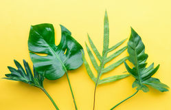 Real leaves on pastel color background.Botanical tropical Royalty Free Stock Photography