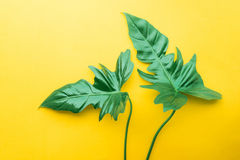 Real leaves on pastel color background.Botanical tropical. Pattern design concepts Stock Photography