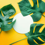 Real leaves with white copy space background.Tropical Botanical. Nature concepts design Royalty Free Stock Photography