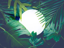 Real leaves with white copy space background.Tropical Botanical Stock Image