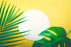 Real leaves with white copy space background.Tropical Botanical Royalty Free Stock Photos