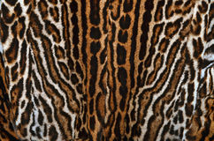 Real leopard fur background Royalty Free Stock Photo