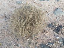 A Real Life Tumbleweed Stock Photos
