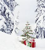 Real, live Christmas tree and presents gifts outdoors with snowy forest wilderness landscape background. Beautiful, simple holiday