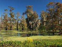 Real Louisiana Royalty Free Stock Photo
